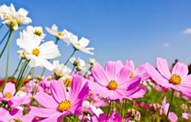 primavera-grupo-abaco